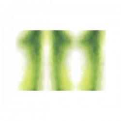 Talco WT Verde Medio